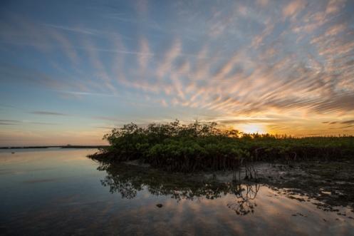 180420_mangrove1